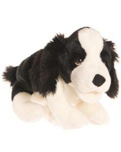 Kleiner schwarz-weißer Hund 33 cm